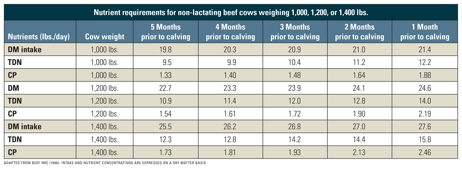 Table shows nutrient requirements for non-lactating beef cows weighing 1,000, 1,200, or 1,400 lbs.