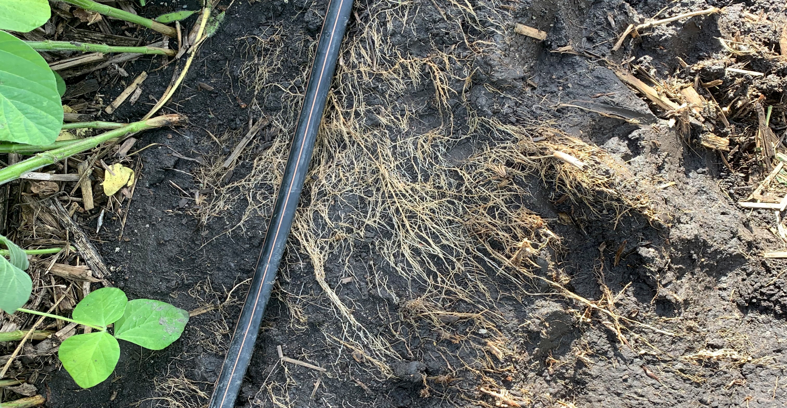 Close up of irrigation line in a soybean field