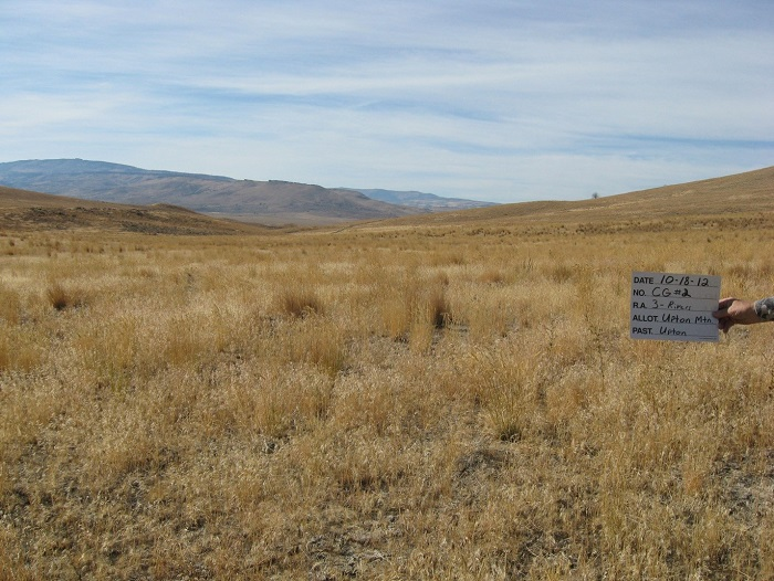 Cheatgrass-dominated site in Oregon