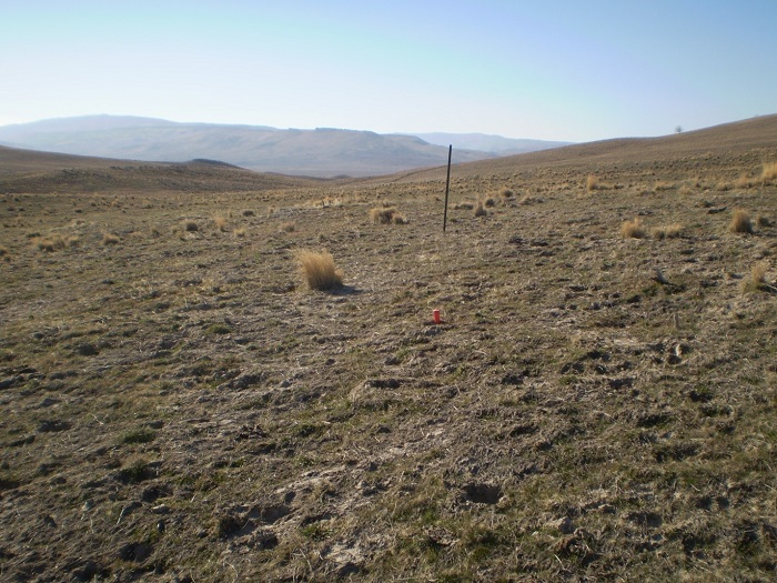 Fall-grazed cheatgrass