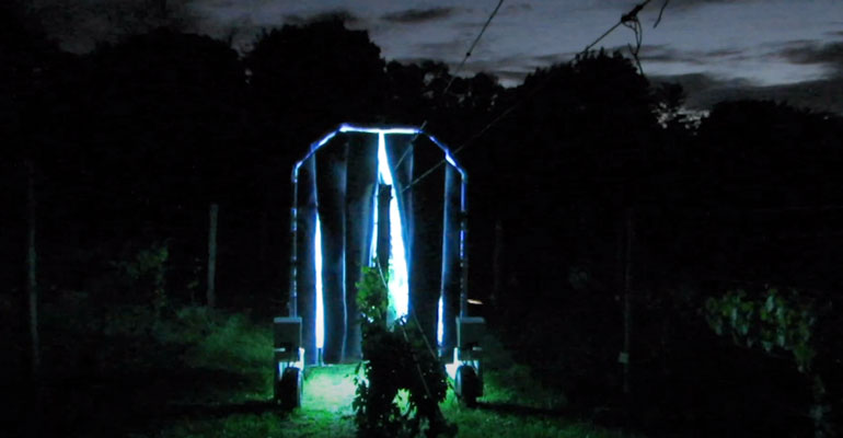 An autonomous robot fitted with UV lights is deployed in a vineyard at night