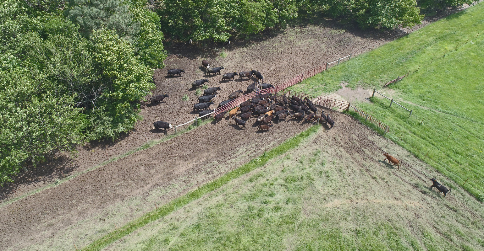 aerial photo of a fenceline weaning system