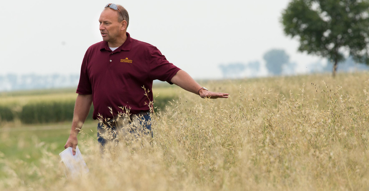 Jochum Wiersma, U-M Extension agronomist in wheat field