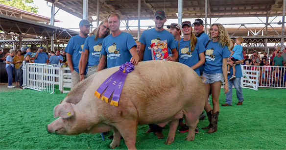 Captain, the Big Boar winner at this year's Iowa State Fair