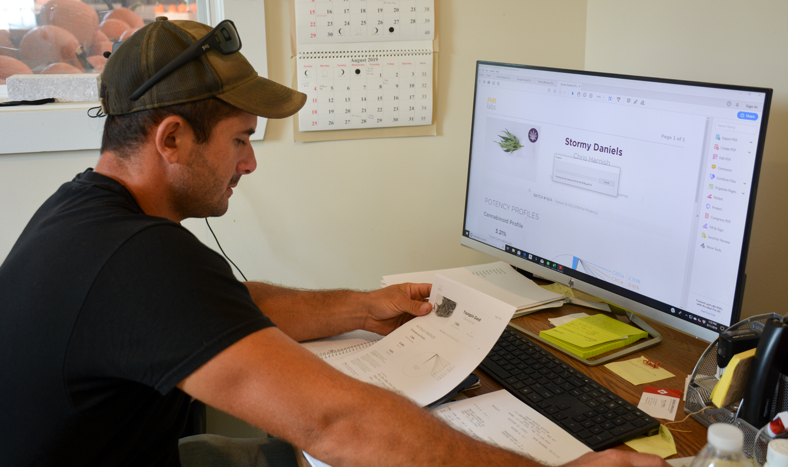 Bryan Harnish reviews test results for THC and CBD levels at his computer