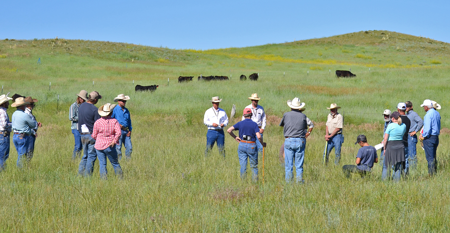 attendees of Jim Gerrish's Management-intensive Grazing school stand in a pasture