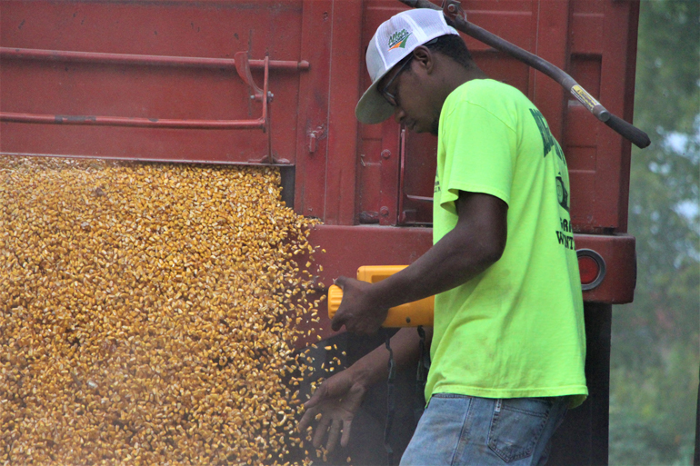 Trent Edwards checks corn moisture as it flows from the truck