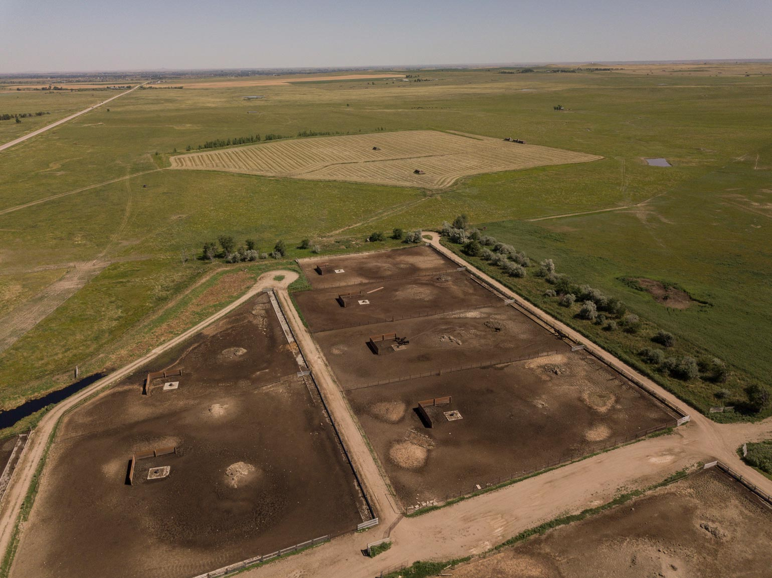 Aerial view a cattle feedlot