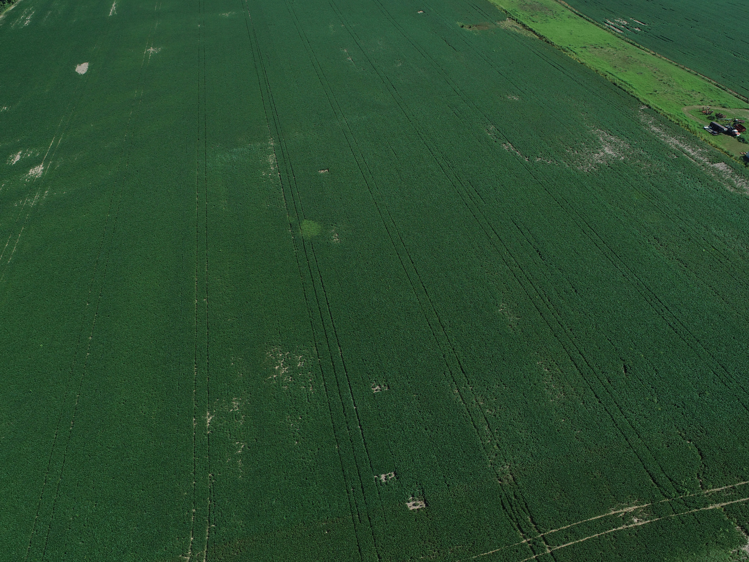 drone photo of thistles growing in soybean field