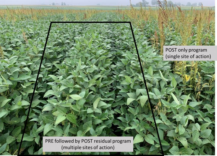 2-11-21 whats new in herbicideswaterhemp_control_pic.jpg