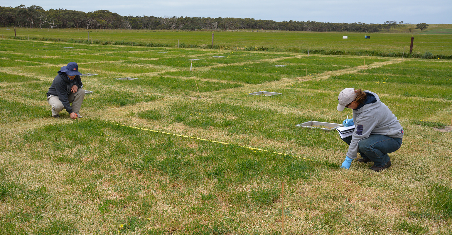 Researchers measure experimental plots and collect data from a field trial to learn about nitrogen loss from different food products.