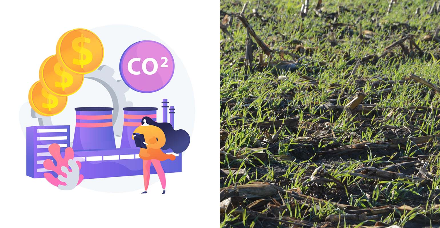 carbon-credit-cover-crops.jpg