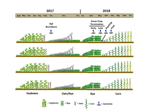 Four cover crop planting dates and two termination dates were studied as part of the trials to evaluate their effect on weed control graphic