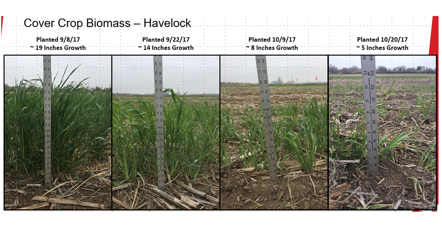 Cover crop biomass for four planting dates in the 2017-2018 trials.