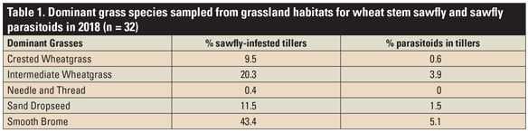 Table 1. Dominant grass species sampled from grassland habitats for wheat stem sawfly and sawfly parasitoids in 2018 (n = 32