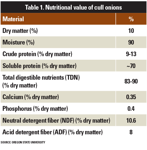 nutritional value of cull onions