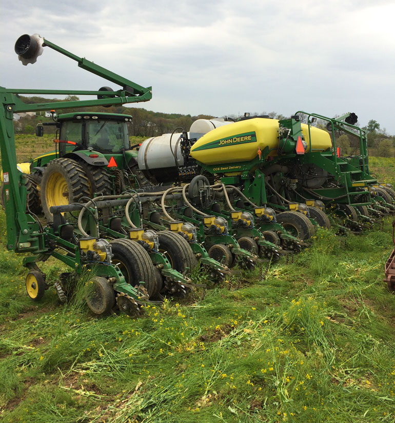 Corn planted into fields of mixed-species cover crops