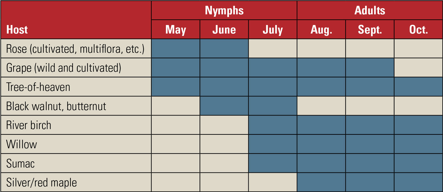Graph shows the most likely plants latternflies will feed on by month