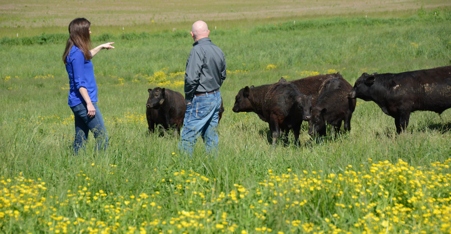 woman and man with Angus bulls on pasture