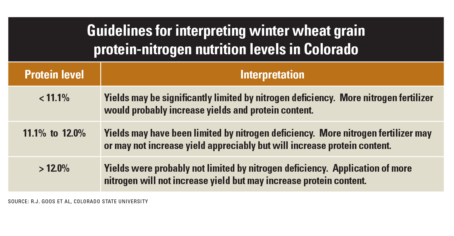 factors that may influence protein production in wheat