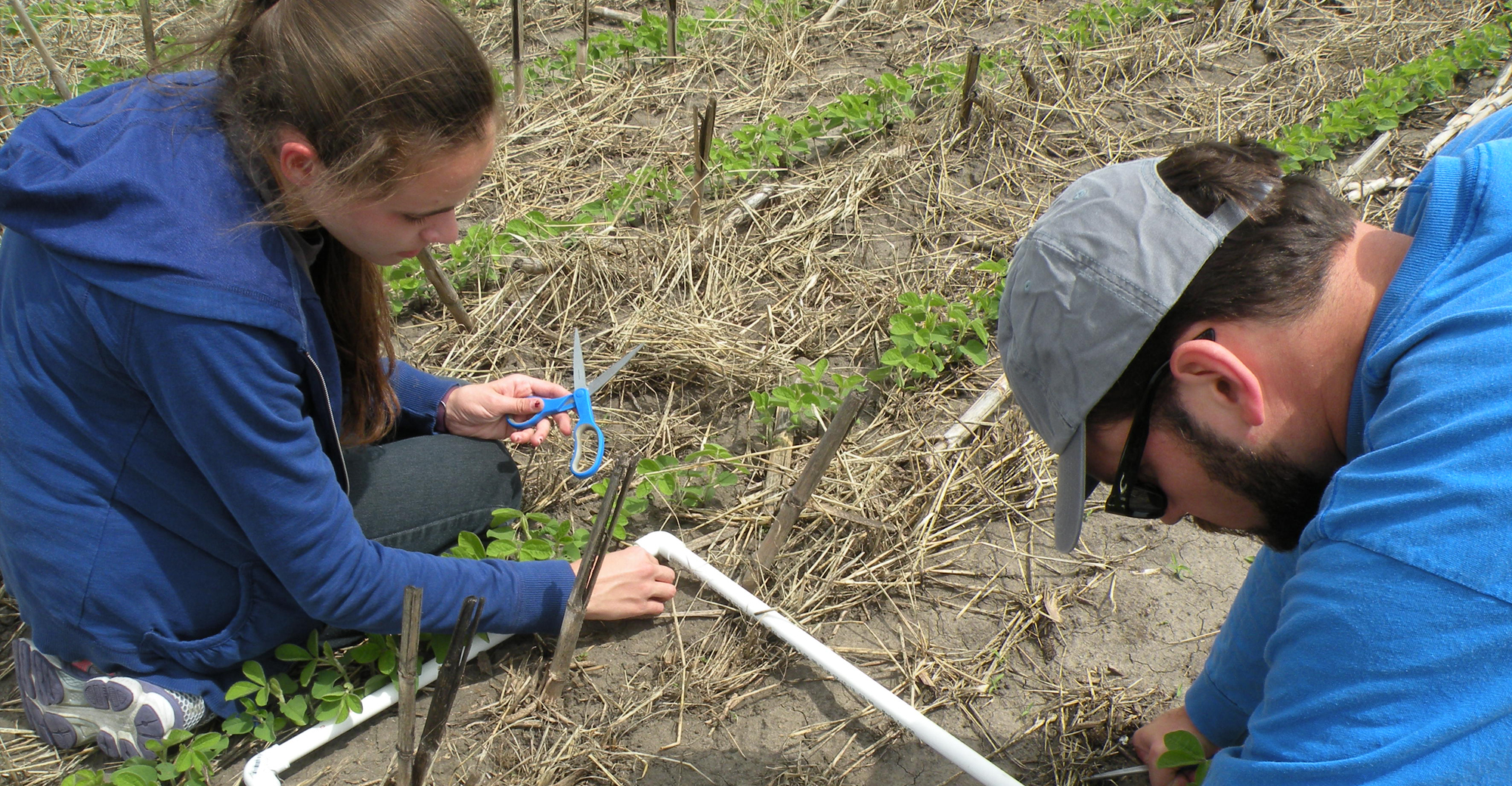 two people using PVC frame to count middens in a section