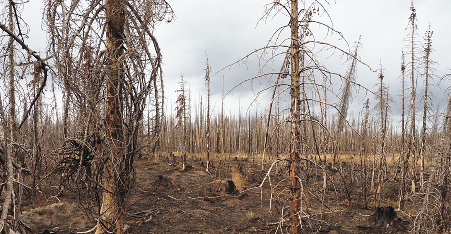 How Western wildfires could affect Nebraska agriculture