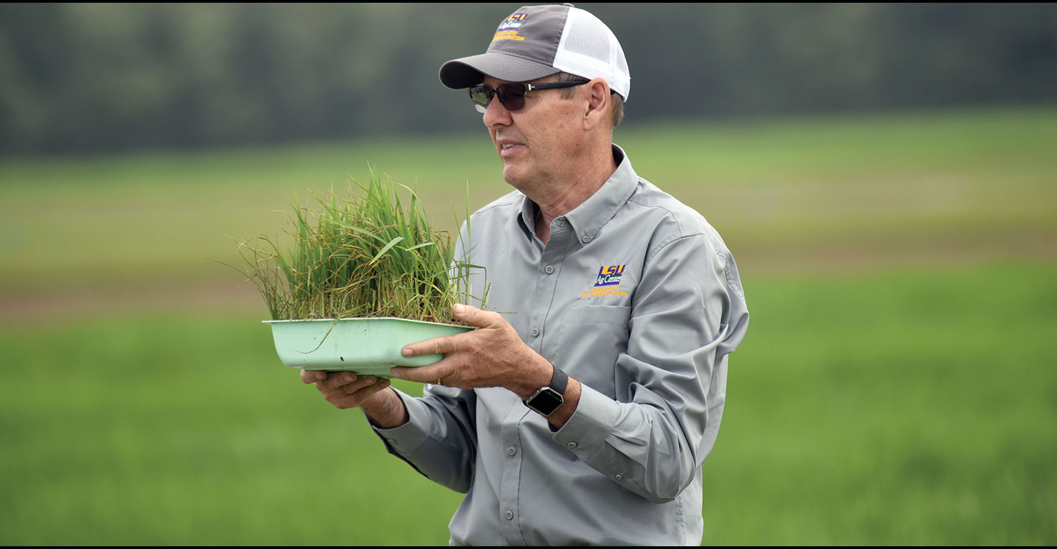 Groth named to rice research chair