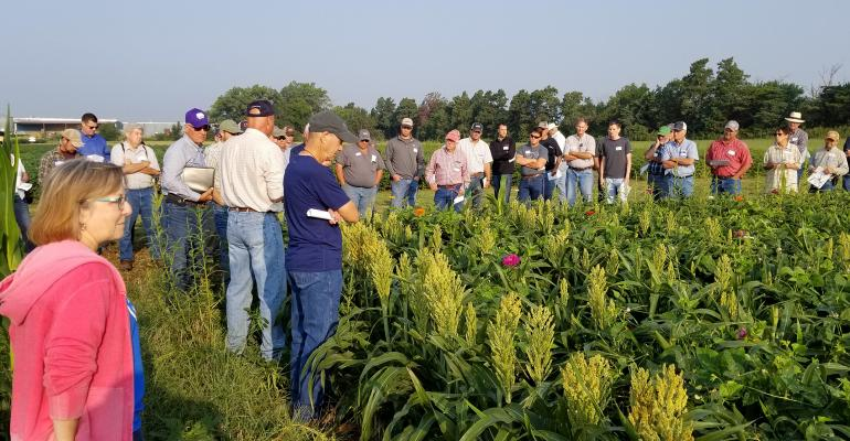 Farmers tour experimental plots in Kansas used to evaluate the effects of planting mung beans and zinnias with milo