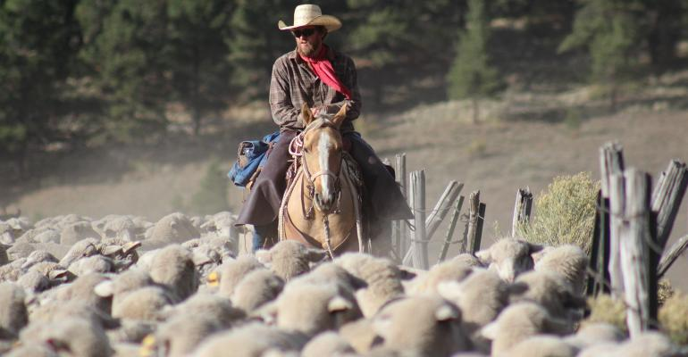 rancher on horse amidst a herd of sheep