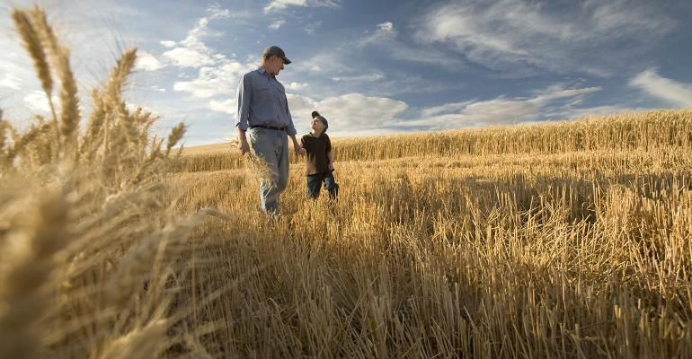 Father and son in wheat field.