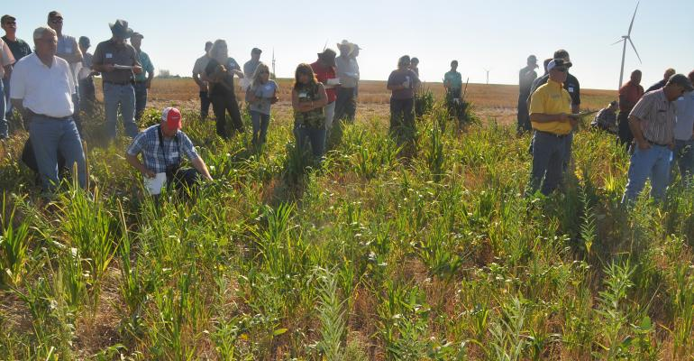 Farmers and ranchers can learn more about the benefits of regenerative agriculture practices at field days like this one in south central Kansas