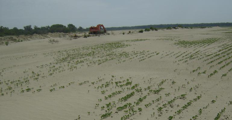 This photo, taken of a soybean field in 2012, shows the problems with sand that occurred when cover crops weren't established before the cash crop to hold sand or sediment in place.