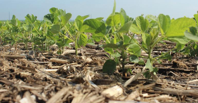 closeup of cover crops