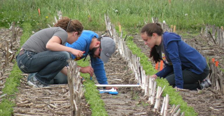 three people counting middens in a crop field