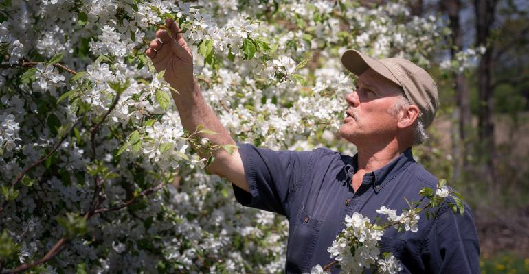 Ian Merwin looking at a blooming tree