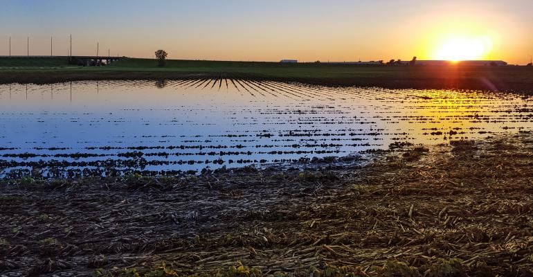 A sunset is reflected in the standing water of a flooded corn field