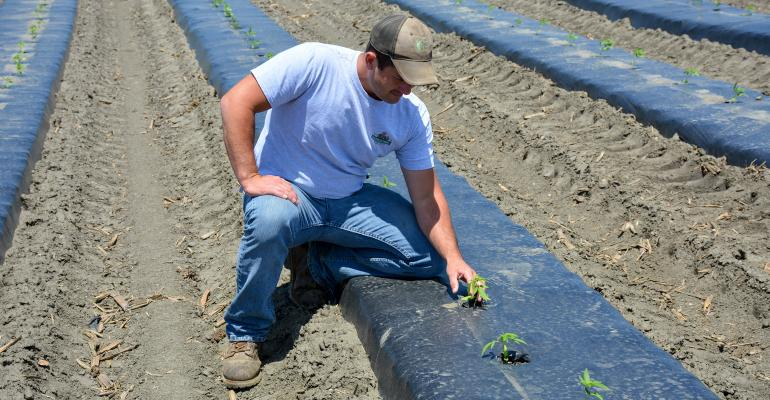 Bryan Harnish kneels beside young hemp plants in 3-foot plastic rows