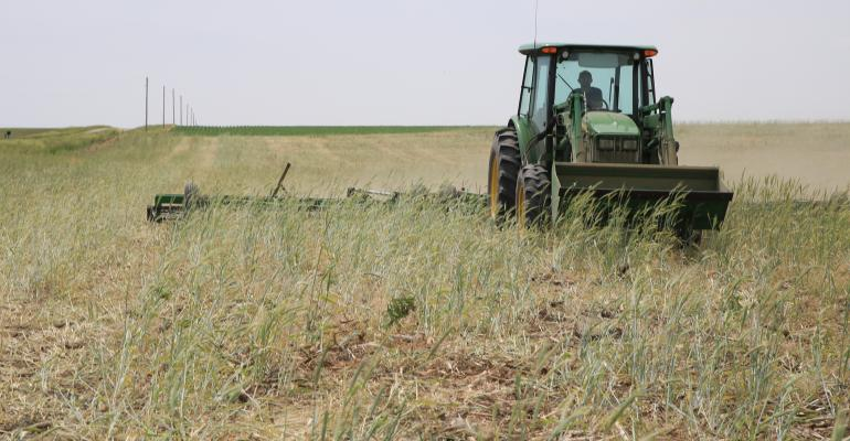 tractor and roller harrow in cereal rye field