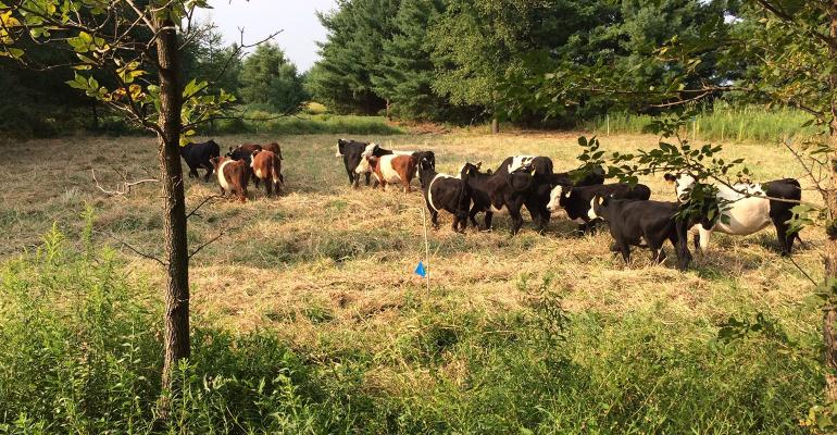 Cattle at Good Earth Farms
