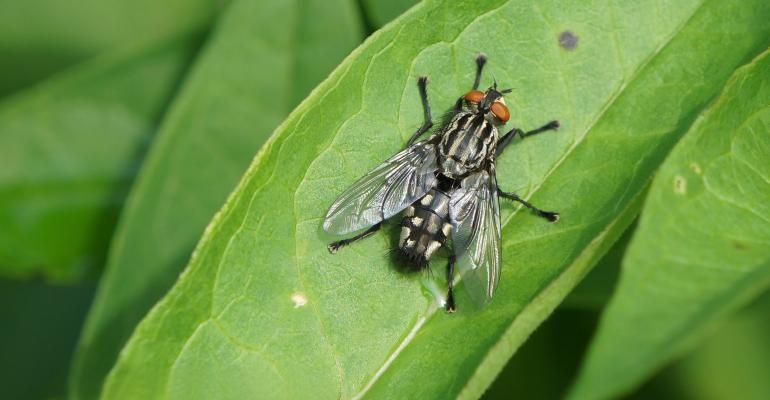 A close up of a fly sitting on a green leaf