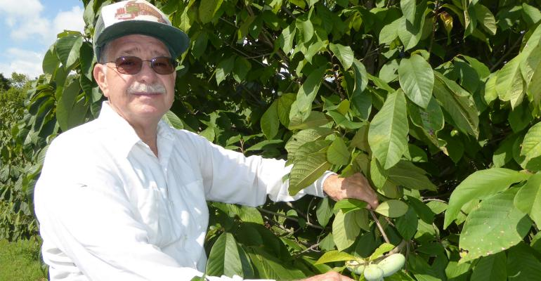 : Ron Powell, a grower of Paw Paws near Cincinnati, feels the little known banana custard tasting fruit is moving gradually toward becoming more of a commercial product