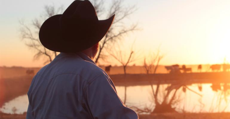 Farmer rancher at sunset with cattle