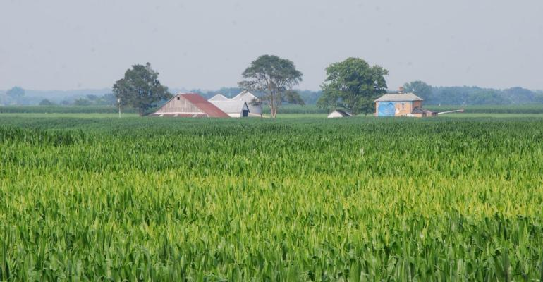 cornfield with farm in background