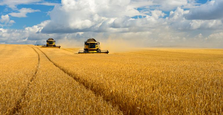 Two combines harvest a wheat field