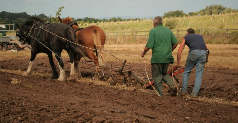 Two farmers in field working a plow pulled by two horses