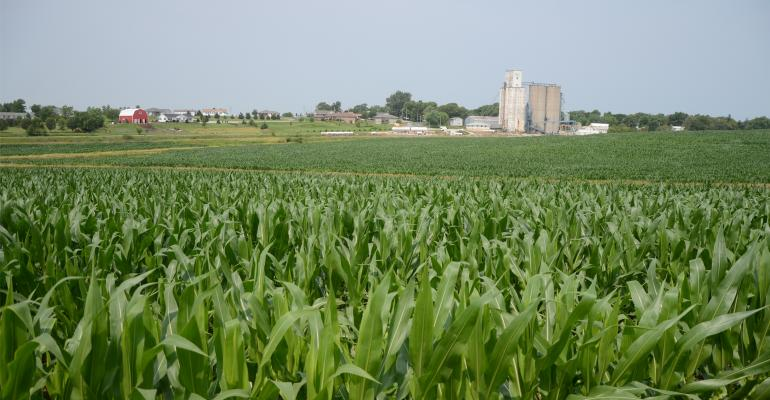 Corn field with farm in background