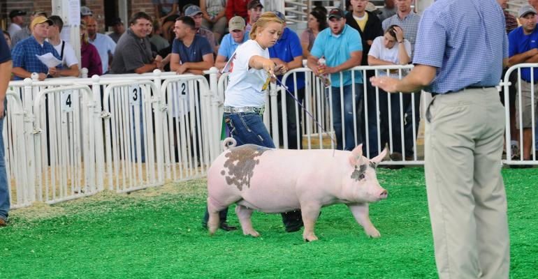 young girl showing hog at iowa state fair
