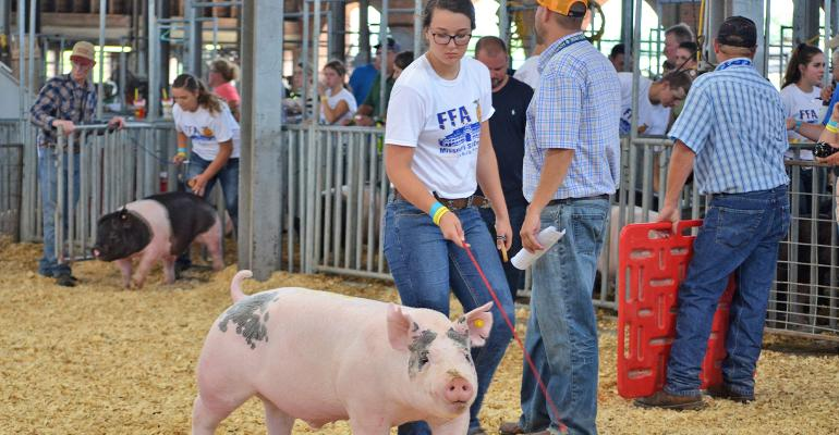 FFA member with hog in show ring
