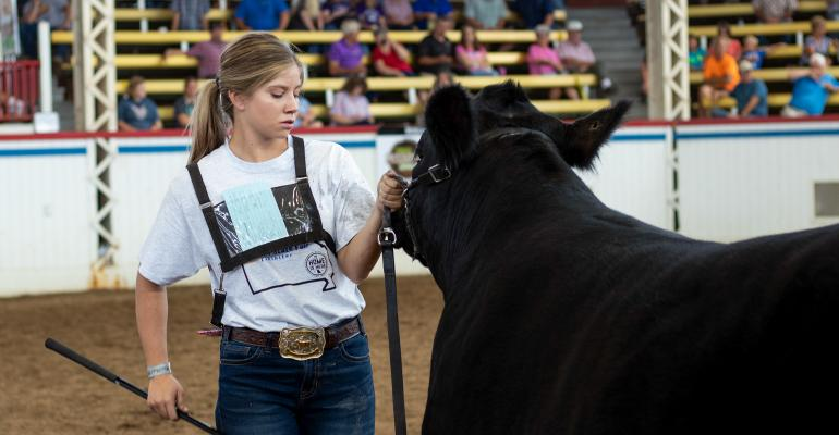 Steer being shown by a youth at Missouri State Fair