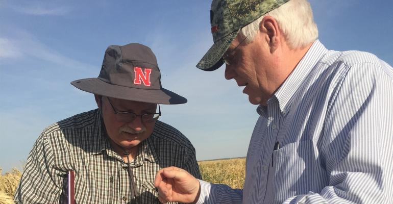 "Stephen Baenziger (left), lead wheat breeder at UNL and Jeff Noel of Husker Genetics examine wheat ""increase"" plots near Yuma, Ariz."